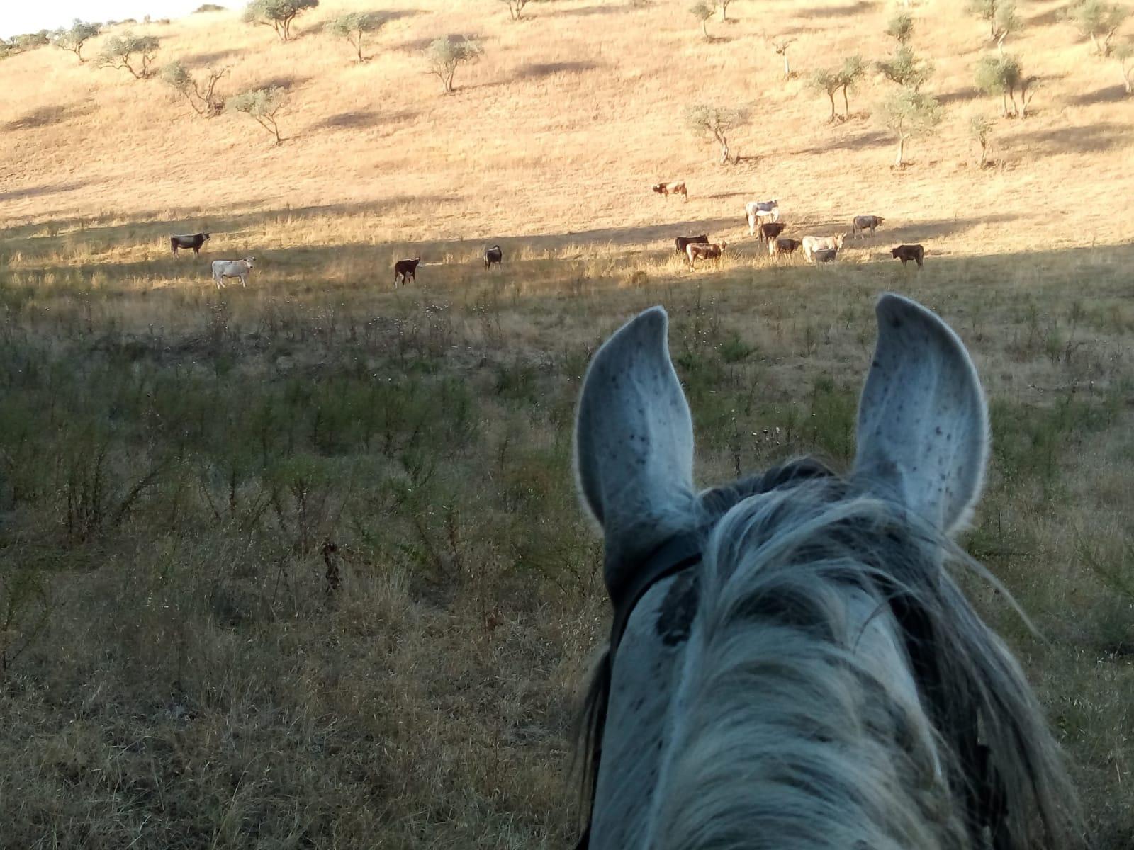 Calanchi a cavallo