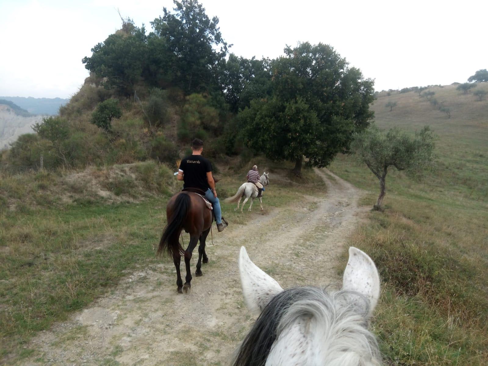 Civita bagnoreggio cavallo