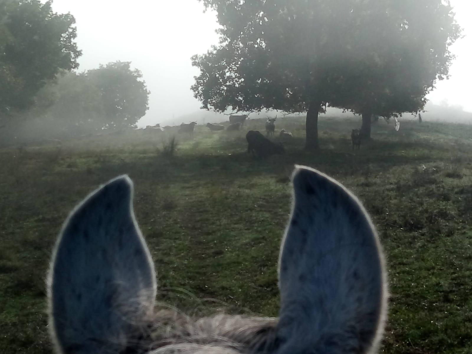 Orvieto cavallo trekking
