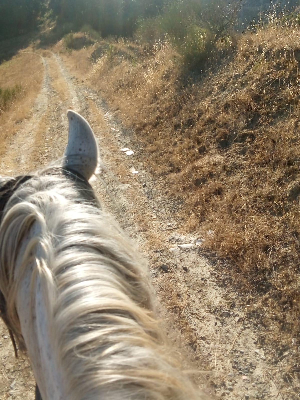 Orvieto trekking cavallo