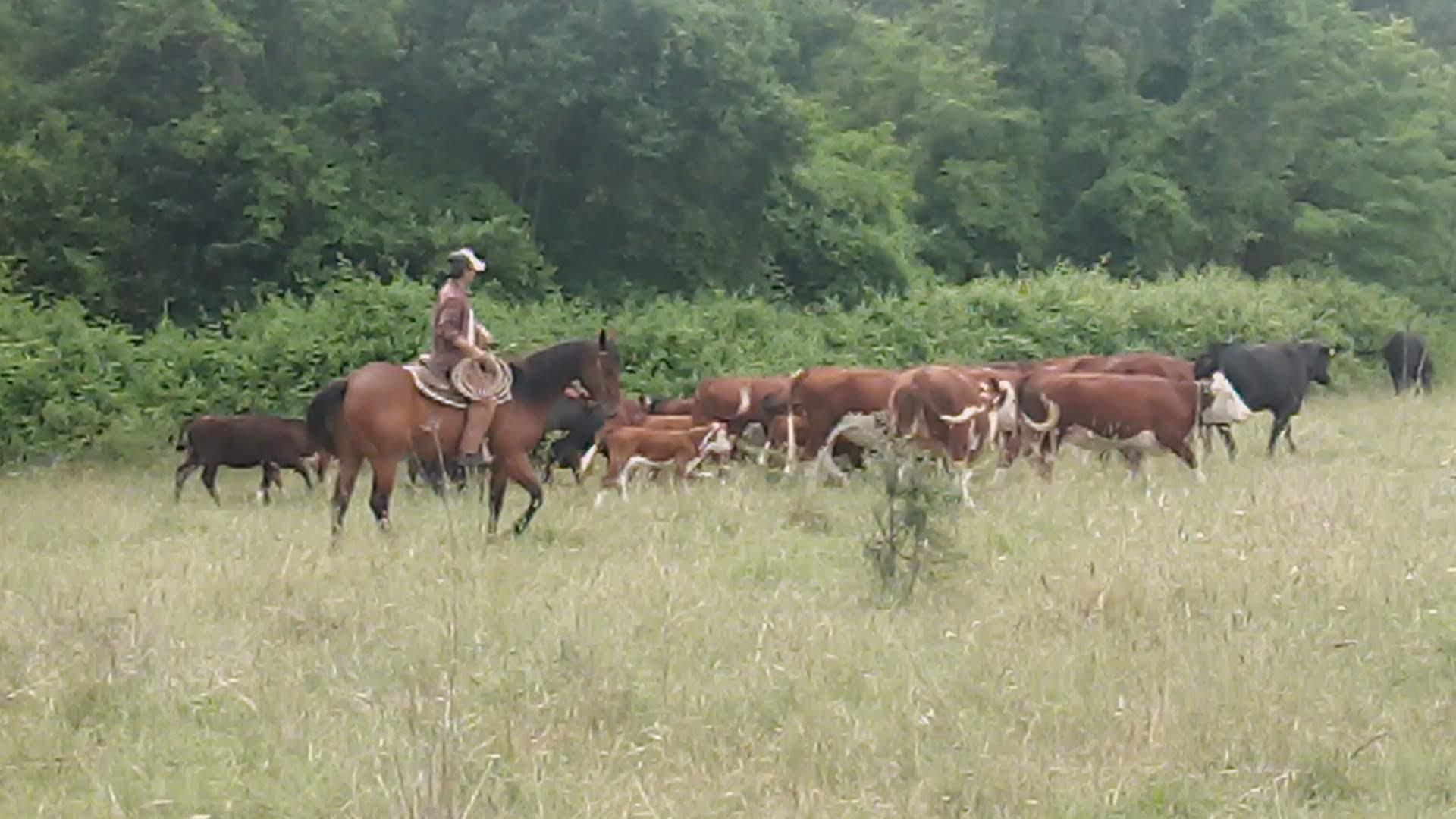 Ranch bagnoreggio cavalli