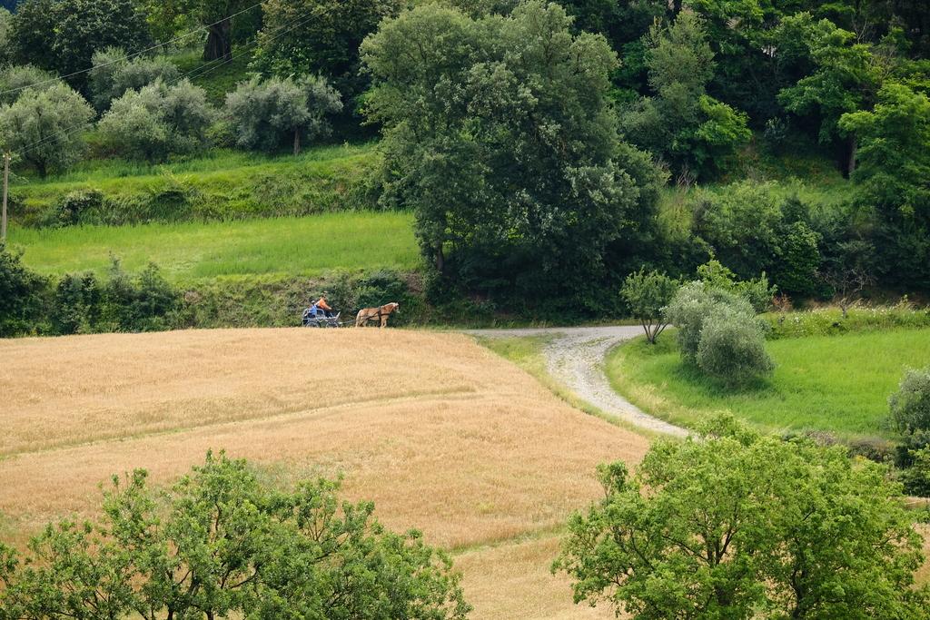 Cab horses tuscany