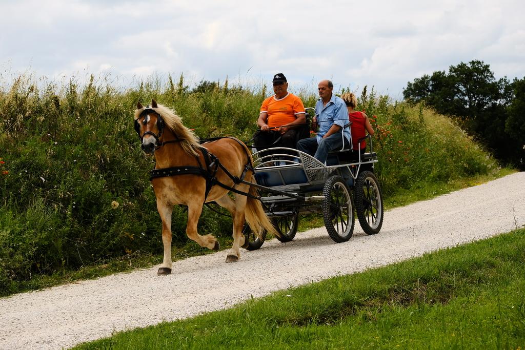 Cavalli carrozza val dorcia