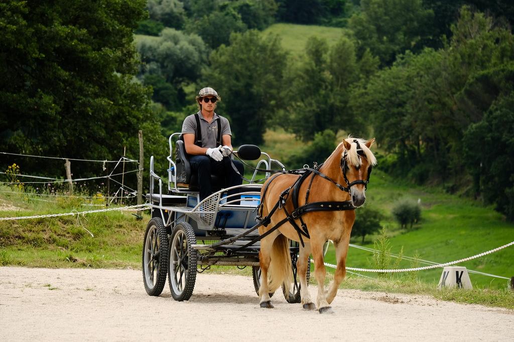 Gita carrozza cavalli