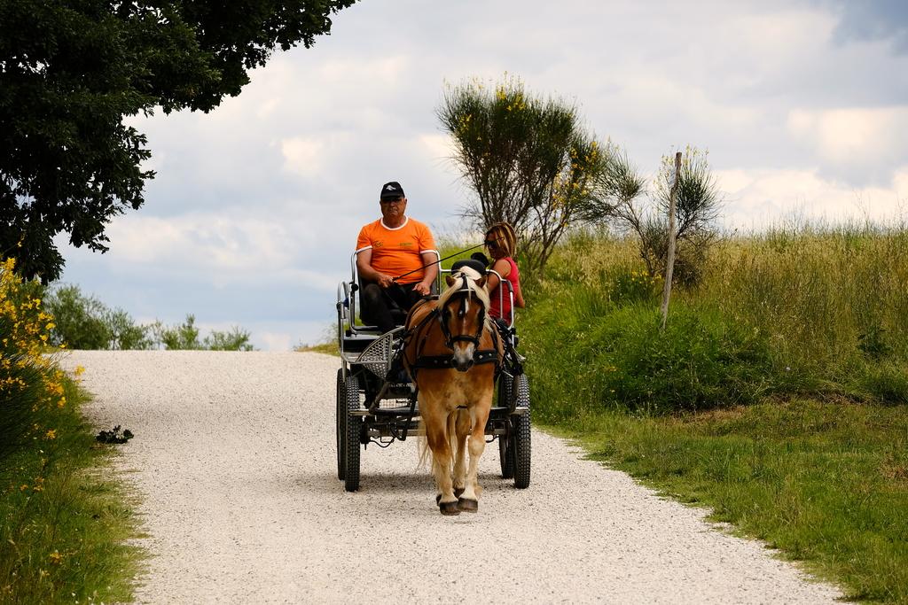 Horse coach tuscany